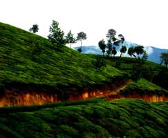 Tour Package In Periyar